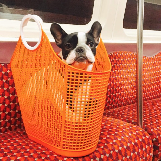 Would you like to see more dogs on Glasgow Subway?