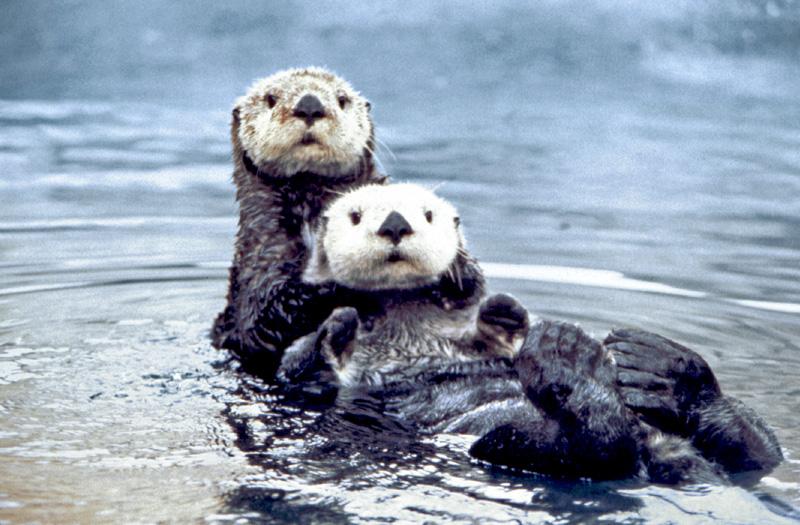Fun Fact Friday – Otters