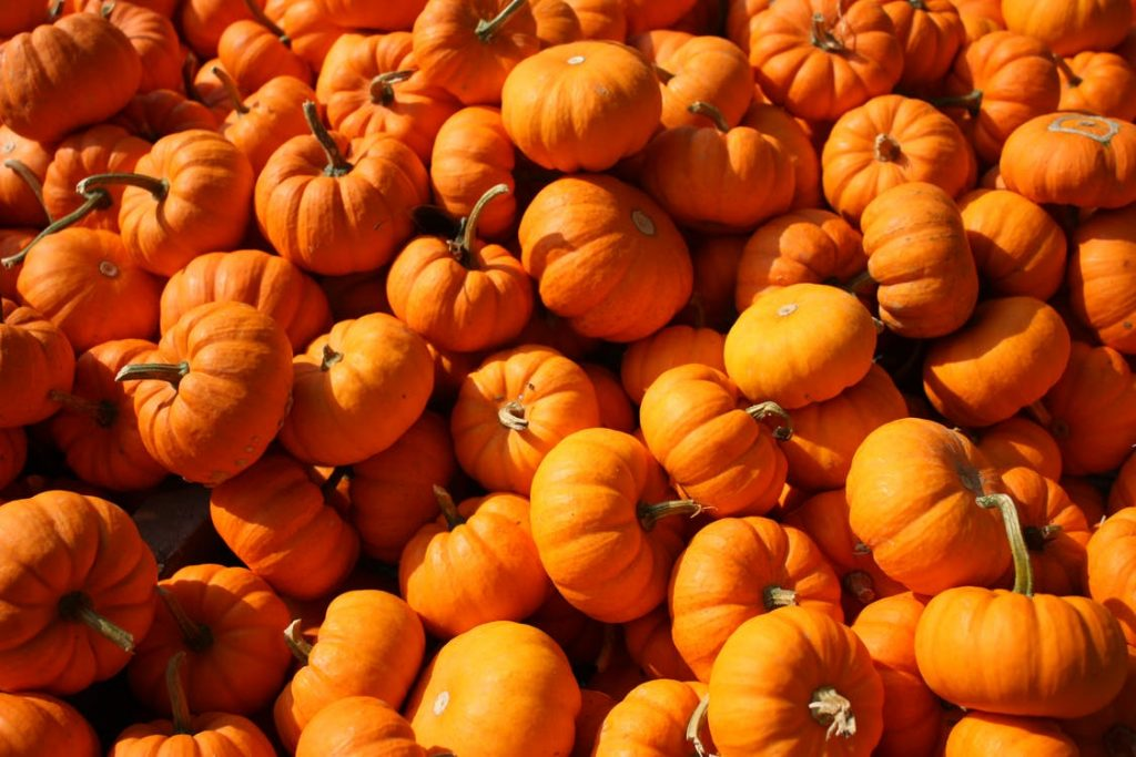 Top 10 leftover pumpkin recipes to reduce waste this Halloween